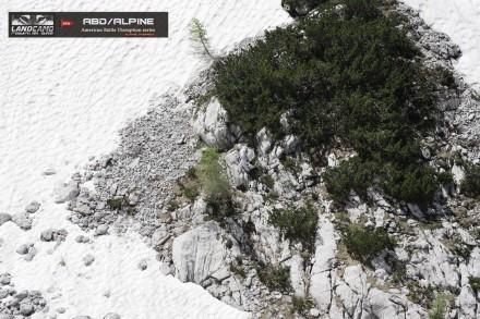 ABD ALPINE Alps1